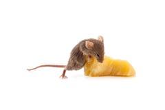 Mysz i ser zdjęcia royalty free