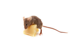 Mysz i ser Obraz Stock