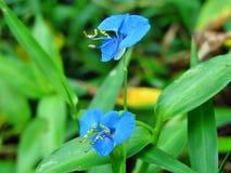 Mysz kwiat Zdjęcia Royalty Free