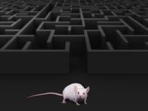 Mysz labirynt fotografia stock