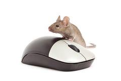 mysz odosobniony biel zdjęcie stock
