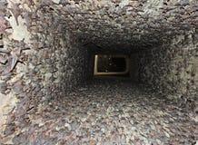 Mysz Ogoniasty nietoperz - kolonia Fotografia Royalty Free