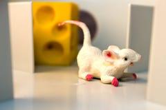 Mysz w labiryncie zdjęcia royalty free