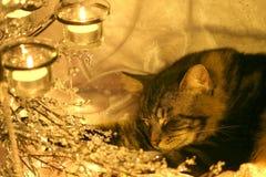 mysz wizję cukru Fotografia Royalty Free