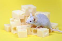 mysz z serem zdjęcia royalty free
