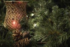 Myszy i sosny rożków bożych narodzeń pokaz Fotografia Royalty Free