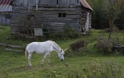 A mythical unicorn grazes in a grassy field beside a barn in Canada royalty free stock photo