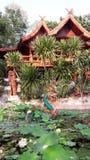 Mythische Nagaskulptur im Lotosteich Stockfotografie