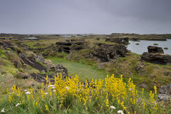 Myvatn in Iceland Stock Photos