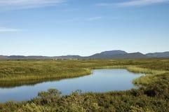 Myvatn lake area, Iceland. Royalty Free Stock Photo