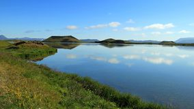 Iceland 2012. Myvatn lake in Iceland in summer 2012 mosquito Royalty Free Stock Photography