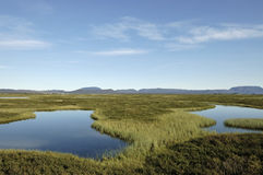 Myvatn lake landscape in Iceland. Royalty Free Stock Photography