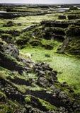Myvatn Landscape Royalty Free Stock Image