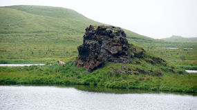 Myvattn Hofdi area in the mist. Colourfull volcanic rock and sheep in the mist at the Hofdi peninsula of Myvatn lake royalty free stock photos