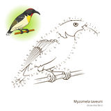 Myzomela taveuni bird learn to draw vector Royalty Free Stock Image