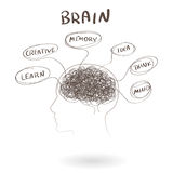 Mózg, myślący ludzki pojęcie wektor Zdjęcia Royalty Free