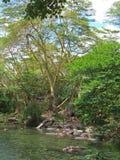 Mzima Springs Royalty Free Stock Photo