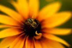 Não é uma abelha imagem de stock royalty free