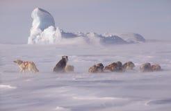 Não longe do Pólo Norte fotografia de stock