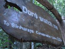 Não me arrebate A Sinharaja fotografia de stock