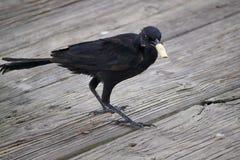 NÃO, pássaro! Imagens de Stock