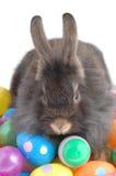 Não toque em meus ovos Fotografia de Stock Royalty Free