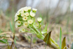 Não uma flor do comum barato planta a beleza de Zsolt da natureza Fotos de Stock