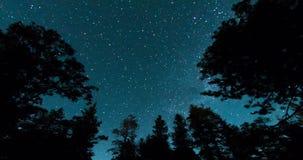 Nächtlicher Himmel über Forest Treetops stock video