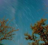 Nächtlicher Himmel mit Bäumen und Sternspuren Lizenzfreie Stockbilder