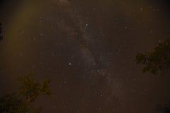 Nächtlicher Himmel mit der Milchstraße über dem Wald und den Bäumen Lizenzfreie Stockbilder
