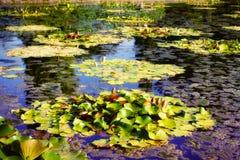 Näckrosväxter med knoppen på dammet Royaltyfria Foton