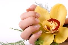 Nägel mit Blume Stockfotos