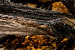 Näherer Blick im Wald lizenzfreie stockbilder