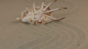 Nähern einer schönen Muschel, die auf einem gewellten Sand liegt stock video footage
