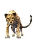 Nähernder Gepard, Tier auf weißem Hintergrund, Vorderansicht vektor abbildung