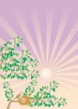 näktergalsongfjäder Royaltyfria Bilder