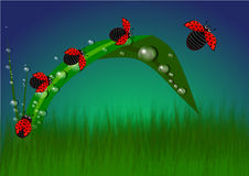 När De är rött, möter gräsplan Royaltyfri Fotografi