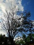 När den blåa himlen möter silueten av ett träd royaltyfria bilder