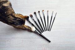 När du charmar den Bengal katten väljer hans favorit- borste för smink royaltyfria foton
