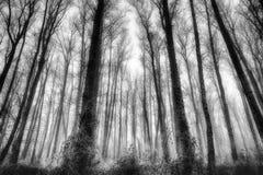 När du fryser dimma mystifierar träd i en skog Arkivfoton