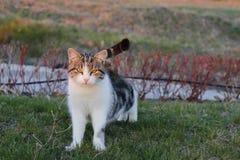 n?r katten gillar f?r att skjuta henne royaltyfri fotografi