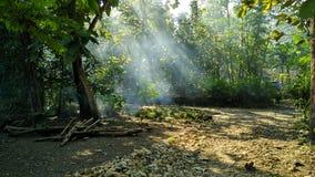 När solljus kommer in i skog arkivfoto