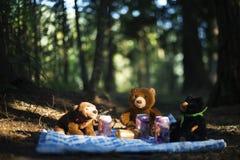 När Teddy Bears har deras picknick arkivbilder