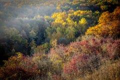 När träden och buskarna har en färgbackanal, innan de dör för ett tag arkivfoto