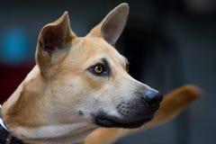 Nära övre bild av blandningavelhunden arkivbilder