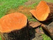 Nära övre bild för skogsavverkning Fotografering för Bildbyråer