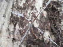 Nära övre bild för spindel Royaltyfria Bilder