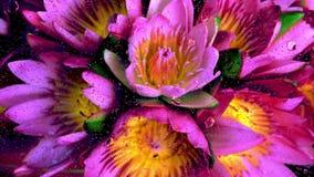 Nära övre blommabild av regndroppar som faller på ett exponeringsglasfönster