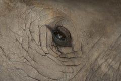 Nära övre för elefant Royaltyfria Bilder