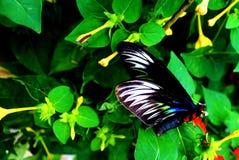 Nära övre för fjäril Arkivbild